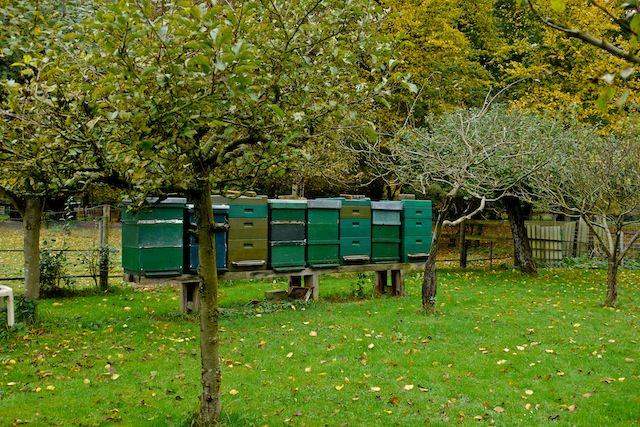 пчелиные ульи на пасеке