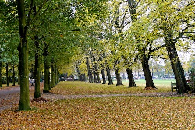 главная аллея парка Клиндендайл