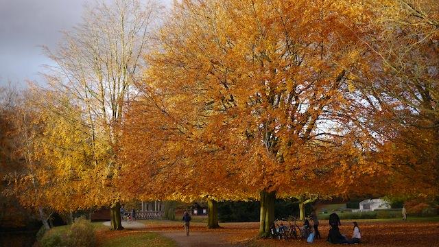осень в парке Клиндендайл