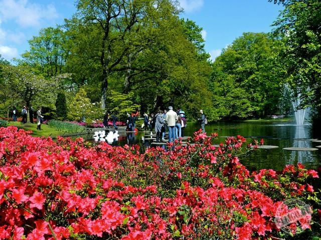 парк Кёкенхоф, Keukenhof-21