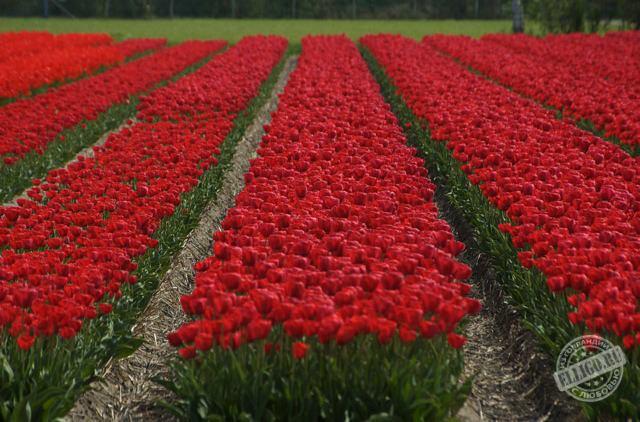 фото корзинки с цветами гербера