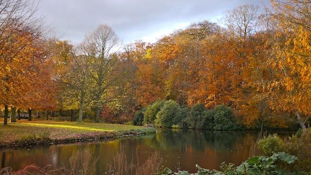 осень в ландшафтном парке Клиндендайл