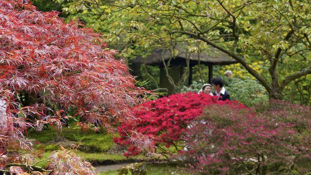 фотосессия молодоженов в Японском саду