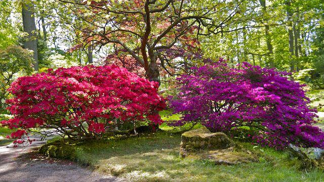 Японский сад весной