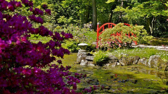 весенний Японский сад