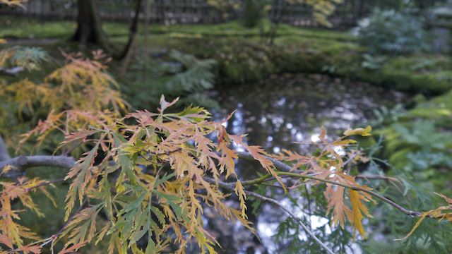 грустинка Японского сада