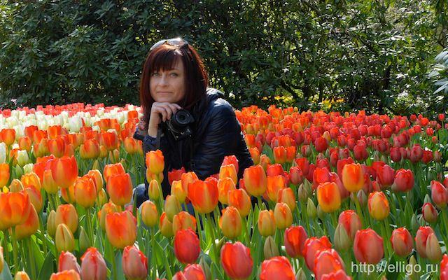 Мои тюльпаны.jpg