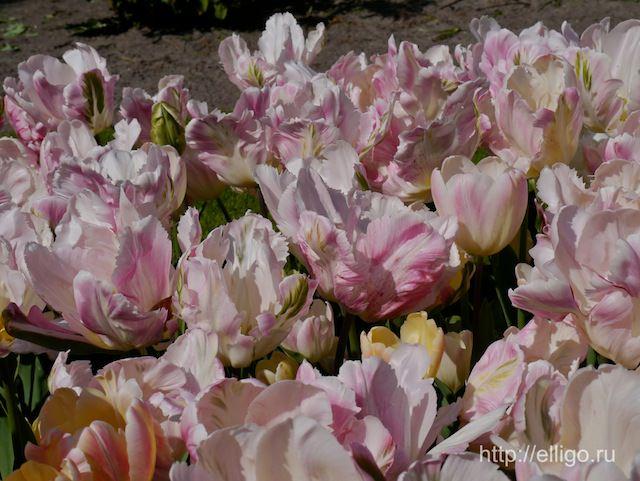 Нежные розовые.jpg