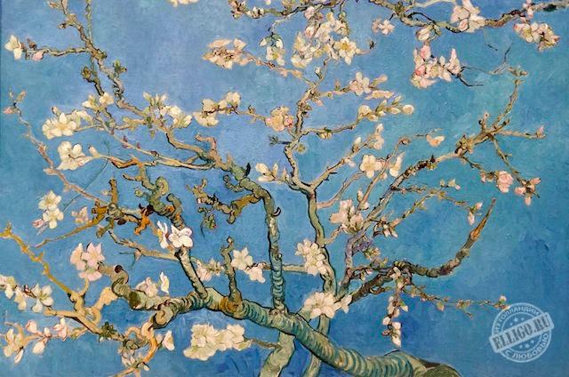 Цветущая сакура Ван Гога