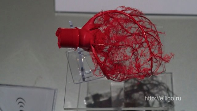 кровеносная система сердца