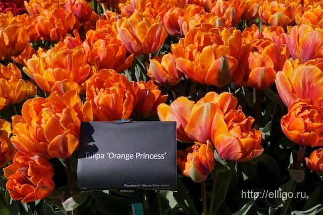 оранжевая принцесса.jpg