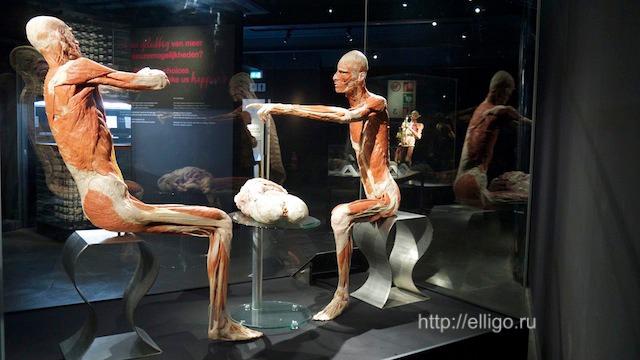 body worlds museum
