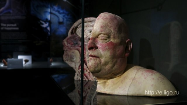 body world museum7.jpg