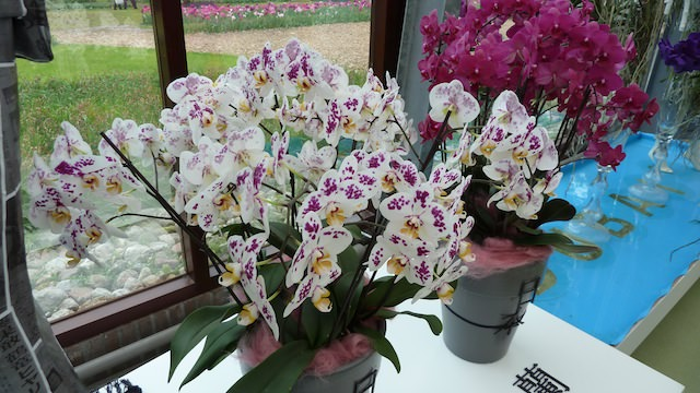Кёкенхоф, орхидеи