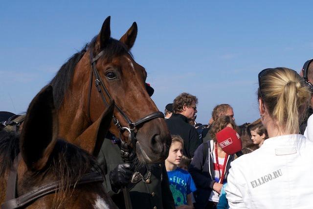 Лошадь, Prinsjesdag