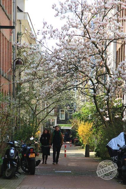 spring_Amsterdam