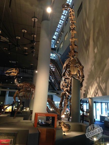 dinozavr_naturalis