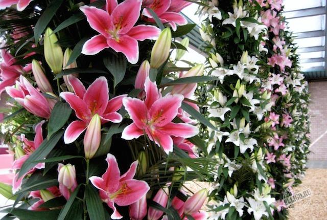flowers-keukenhof