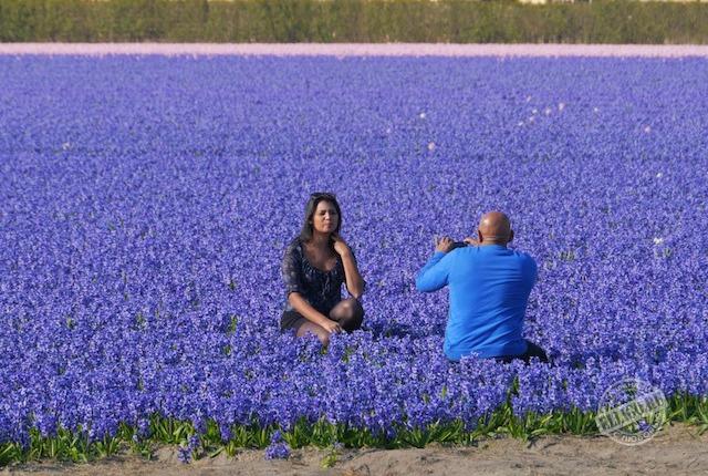 photo-flowers