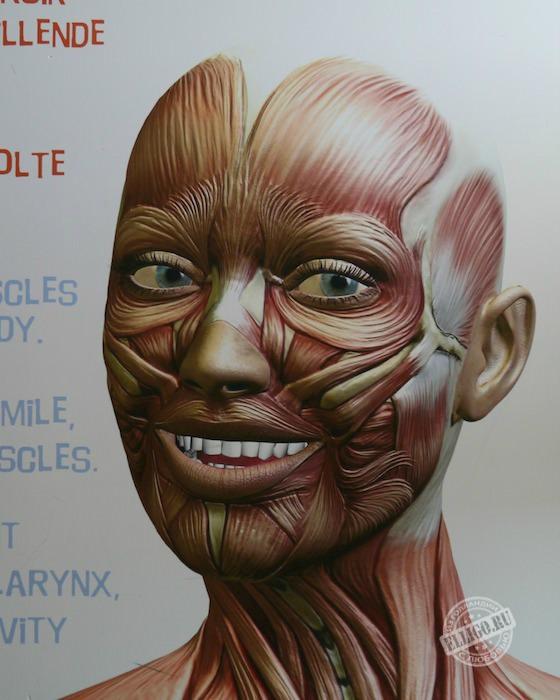 smile-corpus-elligo