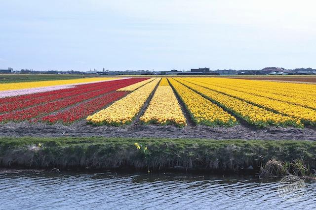 fields-of-flowers