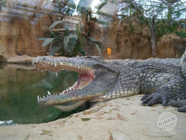 crocodile-zoo-rotterdam-elligo