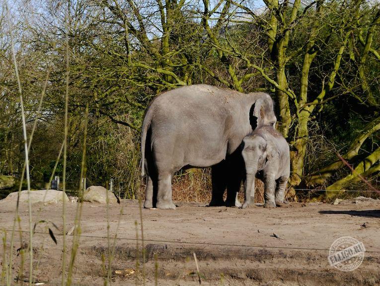 elephanten-zoo-rotterdam-elligo