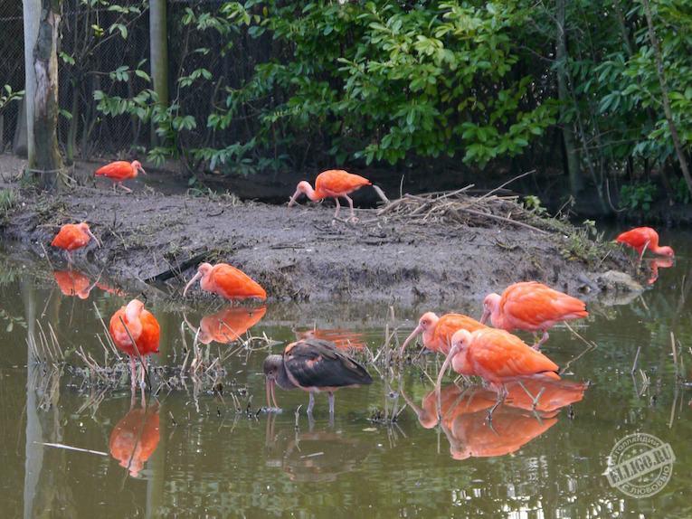 ibis-zoo-rotterdam-elligo