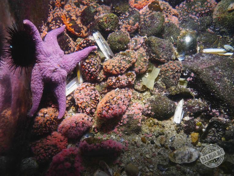 oceanarium-elligo