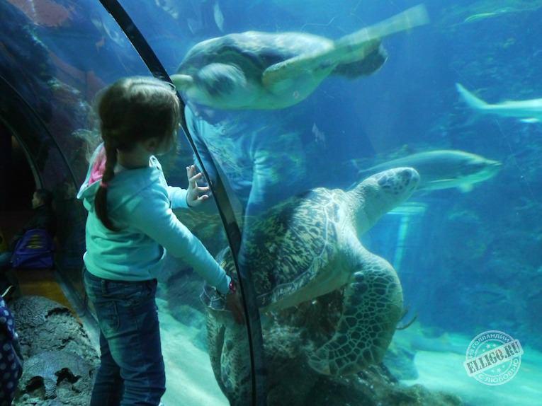 oceanium-zoo-rotterdam-elligo