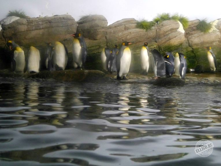 penguins-zoo-rotterdam-elligo