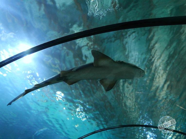 shark-oceanarium-elligo