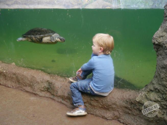 turtle-rotterdam-zoo-elligo